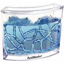 AntWorks - Bild 1